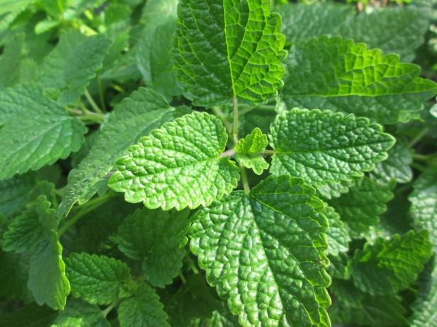 nature-grass-plant-flower-green-herb-839751-pxhere.com.jpg